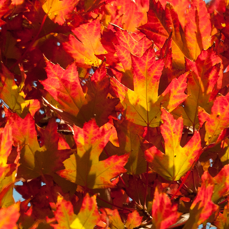 4 October 2011 : Fall colours