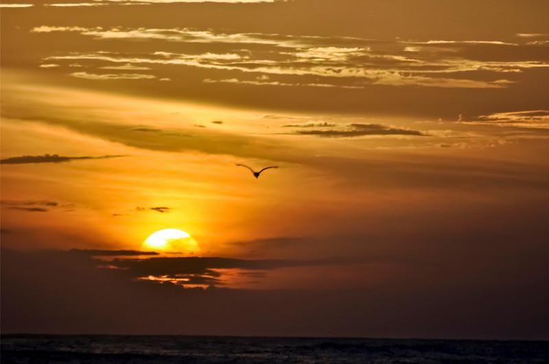 Flying Bird into Orange Sunset