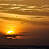 Flying Bird into Orange Sunset