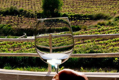 Wine from a vineyard near barcelona, Spain.