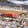 "Lake Erie Gem<br /> <br />  <a href=""http://sillymonkeyphoto.com"">http://sillymonkeyphoto.com</a>"