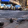 Street Level NYC