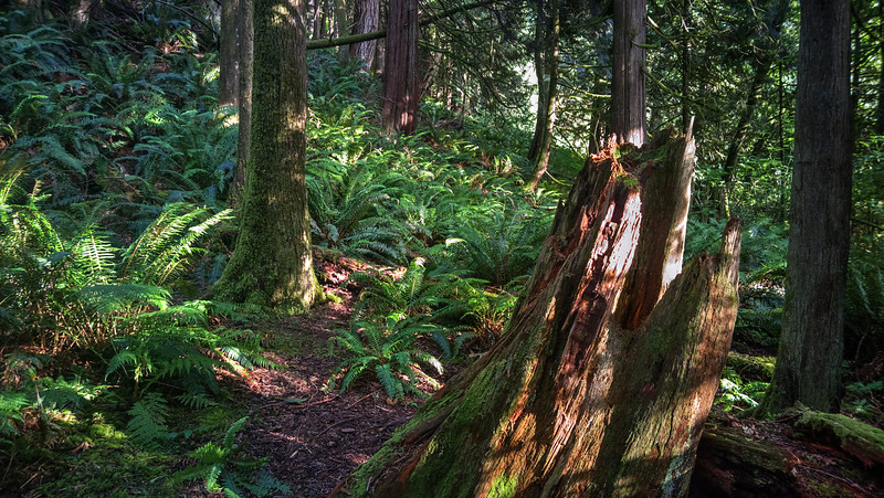 Pacific North West Forest