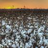 "Cotton<br /> <br /> <a href=""http://sillymonkeyphoto.com/2012/12/23/cotton/"">http://sillymonkeyphoto.com/2012/12/23/cotton/</a>"