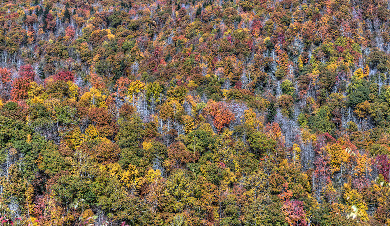 """A few Shades of Grey<br /> <br /> <a href=""""http://sillymonkeyphoto.com/2012/11/21/a-few-shades-of-grey/"""">http://sillymonkeyphoto.com/2012/11/21/a-few-shades-of-grey/</a>"""