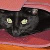 """Yoggy Cat<br /> <br />  <a href=""""http://sillymonkeyphoto.com"""">http://sillymonkeyphoto.com</a>"""