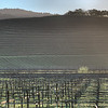 "Sonoma Sunrise<br /> <br /> <a href=""http://sillymonkeyphoto.com/2013/03/17/sonoma-sunrise-2/"">http://sillymonkeyphoto.com/2013/03/17/sonoma-sunrise-2/</a>"