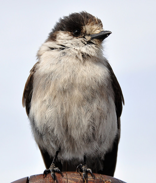 """Clrystal Hut Bird<br /> <br />  <a href=""""http://sillymonkeyphoto.com"""">http://sillymonkeyphoto.com</a>"""