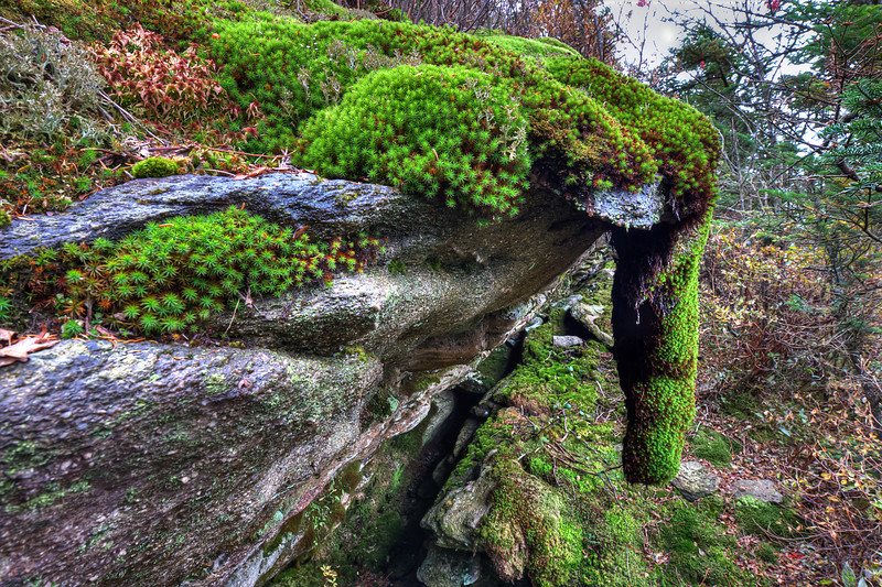 """Moss Stalactite<br /> <br />  <a href=""""http://sillymonkeyphoto.com/2011/11/19/moss-stalactite/"""">http://sillymonkeyphoto.com/2011/11/19/moss-stalactite/</a>"""