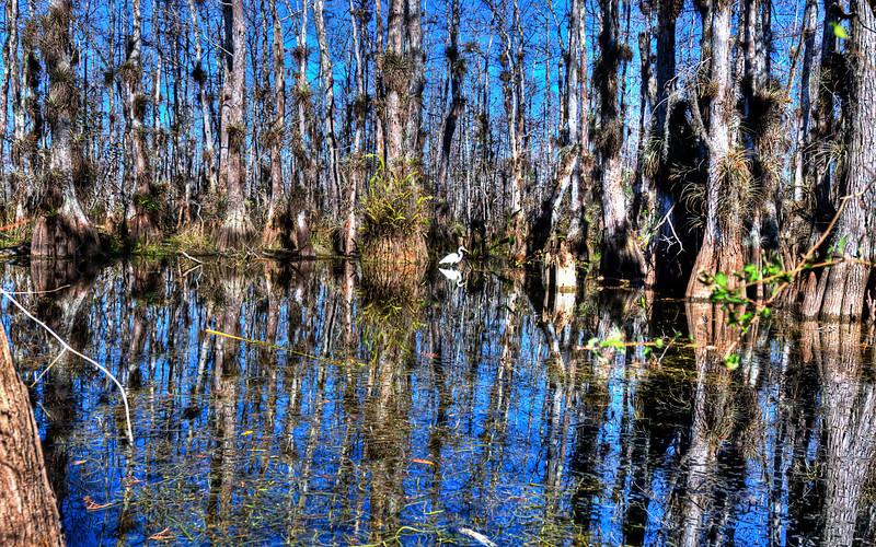 "The Big Cypress Swamp<br /> <br />  <a href=""http://sillymonkeyphoto.com/2010/12/30/the-big-cypress-swamp/"">http://sillymonkeyphoto.com/2010/12/30/the-big-cypress-swamp/</a>"