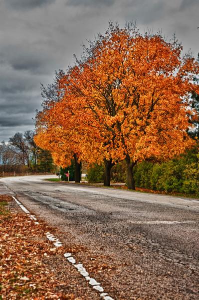 11-8-11 : More fall colours.
