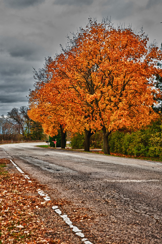 11-8-11 : More fall colours.