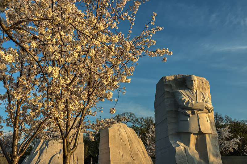 MLK Cherry Blossoms