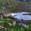 "Alpine Summer<br /> <br />  <a href=""http://sillymonkeyphoto.com/2011/03/26/alpine-summer/"">http://sillymonkeyphoto.com/2011/03/26/alpine-summer/</a>"