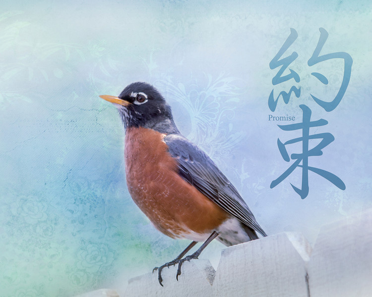 We have robins galore this year. This is my tribute to these hard-working parents.