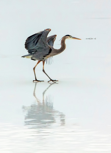 Why are the best days to photograph birds the coldest days? 01.21.13