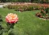Old shot from the rose garden.<br /> September 29, 2010