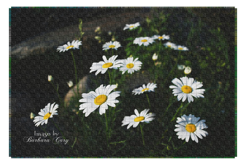 Trying to break up the monotony of my posts, I literally randomly selected a photo from my files and shut my eyes and clicked on a PS action and voile, here it is. This action is weave by PanosFX.<br /> <br /> These daisies were growing wild on the bank of Fern Lake in the Adirondacks. Eye candy for a photographer...<br /> <br /> Thanks for the positive feedback. YES, I'm ready to soak up those rays of sunlight!!