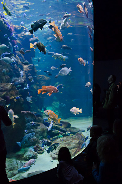 January 31, 2011<br /> Fish Tank at the Academy of Sciences, Golden Gate Park, San Fransisco