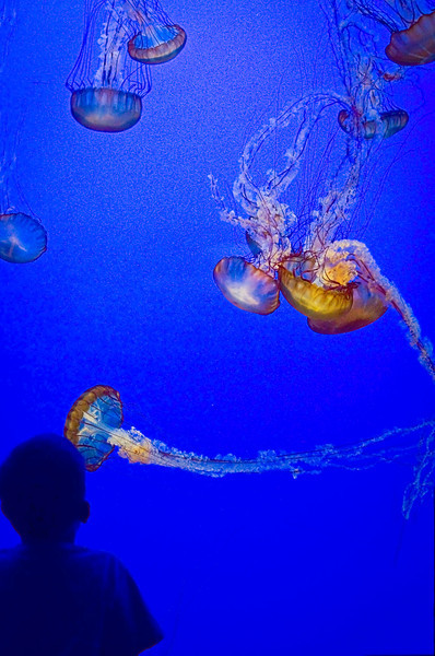 April 10, 2012<br /> Jellies<br /> Monterey Bay Aquarium