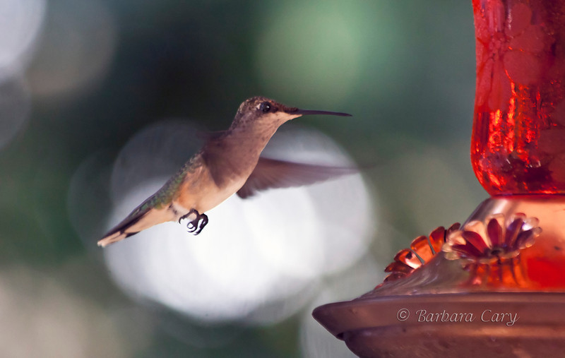 Been MIA. It just seems like there's not enough time in the day to get everything done. I did take time out yesterday to try to capture some hummingbird images. Seems they are the busiest during the heat of the day. 8.2.11