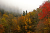 "Autumn Colors in the Smokies near Newfound Gap, elevation over 5,000 feet.  This photo was taken on the Tennessee side of the mountain on route 441.<br /> <br /> More photos of the Smokies are in the gallery  <a href=""http://www.naturemuse.com/Landscapes"">http://www.naturemuse.com/Landscapes</a>"