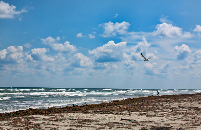 This was taken at South Padre Island, Texas in April. The shorter days and my new job have really cut into my photography time, so I have begun going through my old photos. This new job is really kicking my butt. I don't have much energy left at the end of the day, but hopefully it'll get better. Hope everyone had a great Thanksgiving. 11.29.12