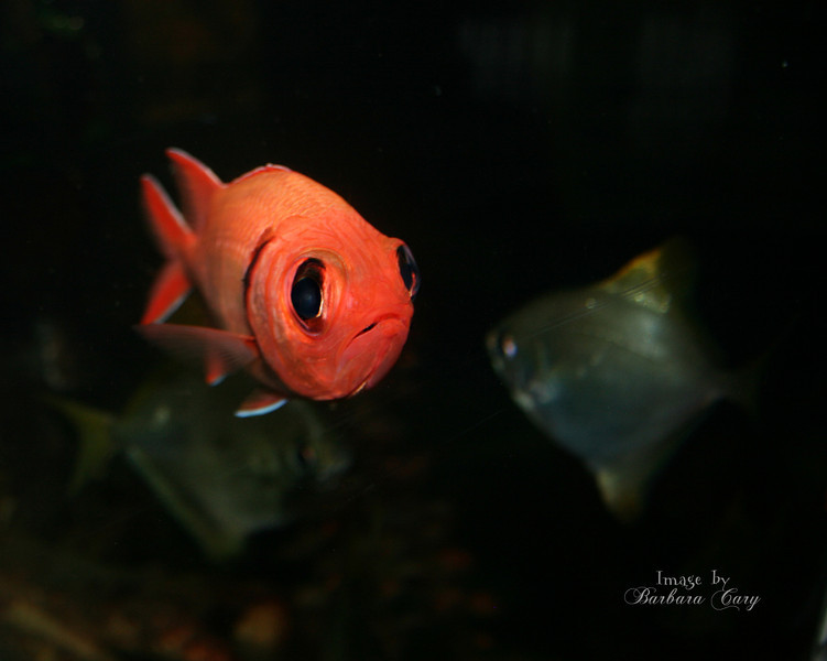 "Woo is me... This neon orange fish seems so sad. He seems to be saying, ""Get me out of here.""<br /> TGIF, have a great weekend. 2.25.11"