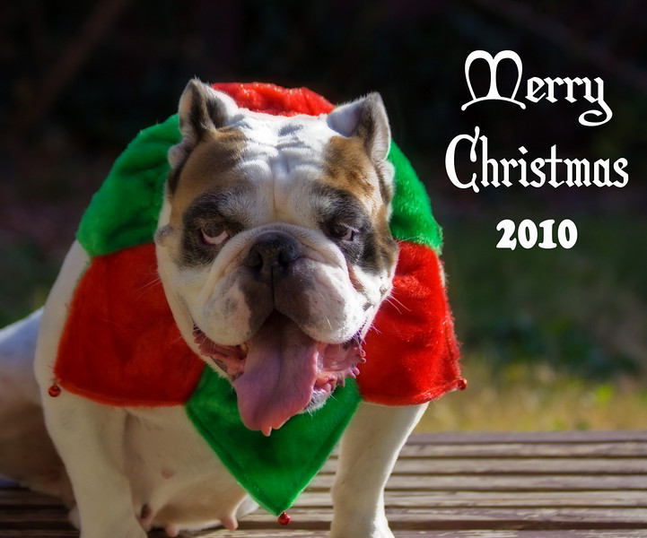 Enjoying the weather here in Dallas. Couldn't resist this shot of my son's bulldog, Sue. Happy Holidays everyone!!
