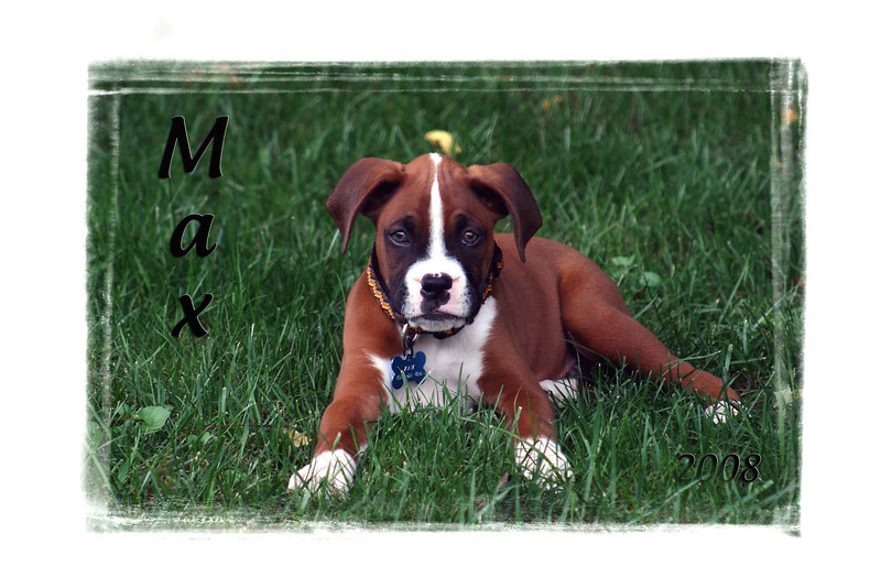I am maxing out my 1 TB hard drive, so guess what I'm doing? Yep, deleting crummy photos. As I was doing this, I ran across this photo of Max when he was a puppy. He hasn't quite grown into his ears yet here, but he still is the cutest little guy. He is truly Randy's best friend, so loyal and loving, always wanting to please. We should all have a friend like that. 2.15.12