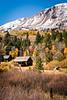 Fall Color along Hwy 88, California