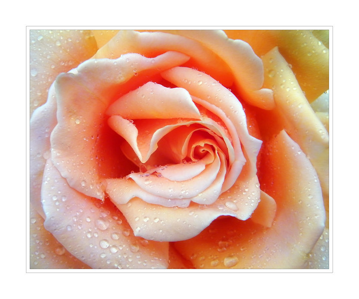Looking forward to this year's roses. 2.28.12