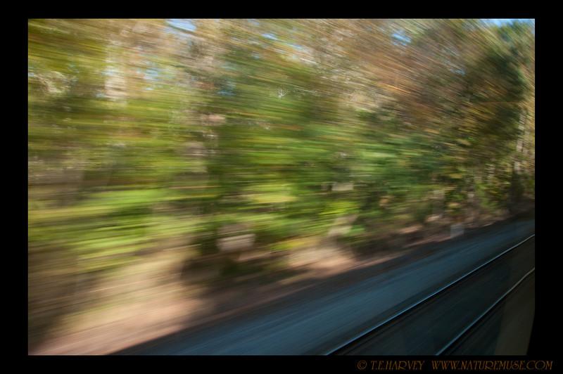 Photo taken riding a train to Clifton Day.