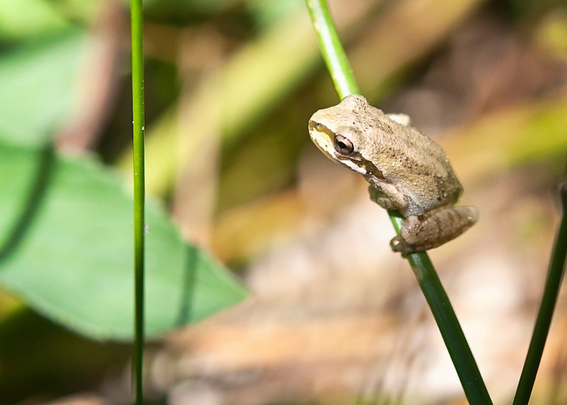 Froggy (or maybe a toad).  Went hiking around a dried up pond.  Lots of little frogs and toads hopping around catching bugs.  We were also able to catch some baby snakes, too.<br /> August 29, 2010
