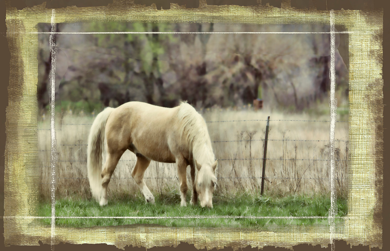 This was taken last spring at my brother's place. This palomino is like a little puppy dog. So friendly. Frame treatment from OnOne.