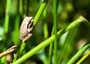 Another Frog or Toad.<br /> September 2, 2010