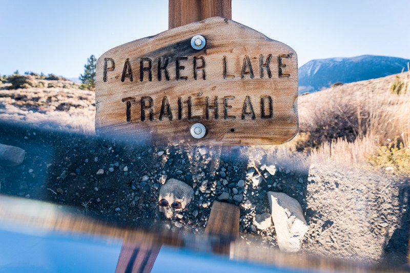 Skull at Parker Lake, California