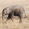 Amboseli National Park - Kenya<br /> Baby Elephant<br /> <br /> So glad to be home but it was hard to leave this beautiful country.