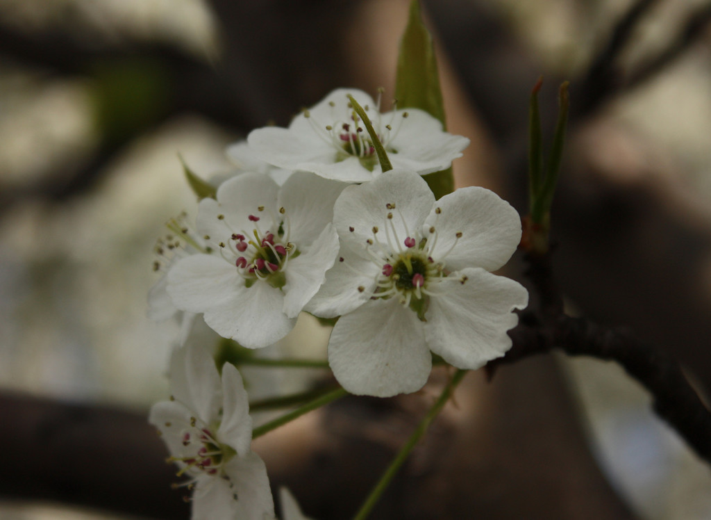 """Blossom""<br /> <br /> <br /> I love better to count time from spring to spring; it seems to me far more cheerful to reckon the year by blossoms than by blight. ~Donald G. Mitchell ~"