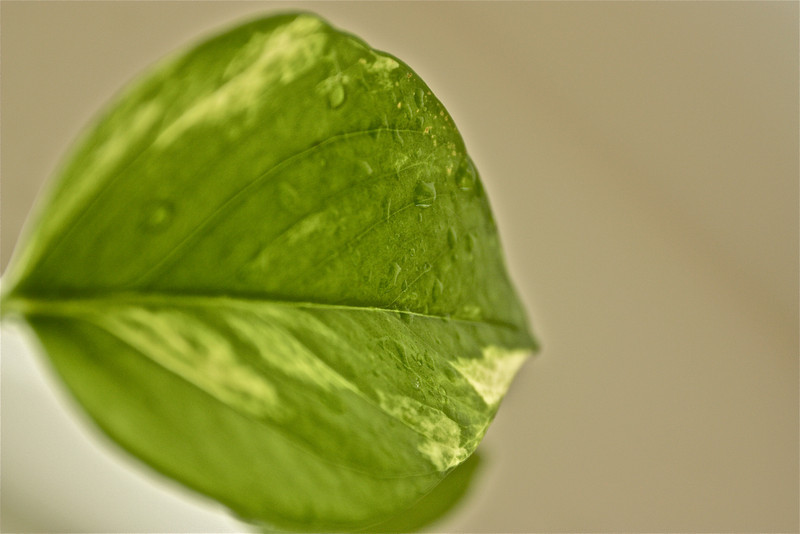 """Green""<br /> <br /> <br /> Green, which is Nature's colour, is restful, soothing, cheerful, and health-giving.~Paul Brunton~"