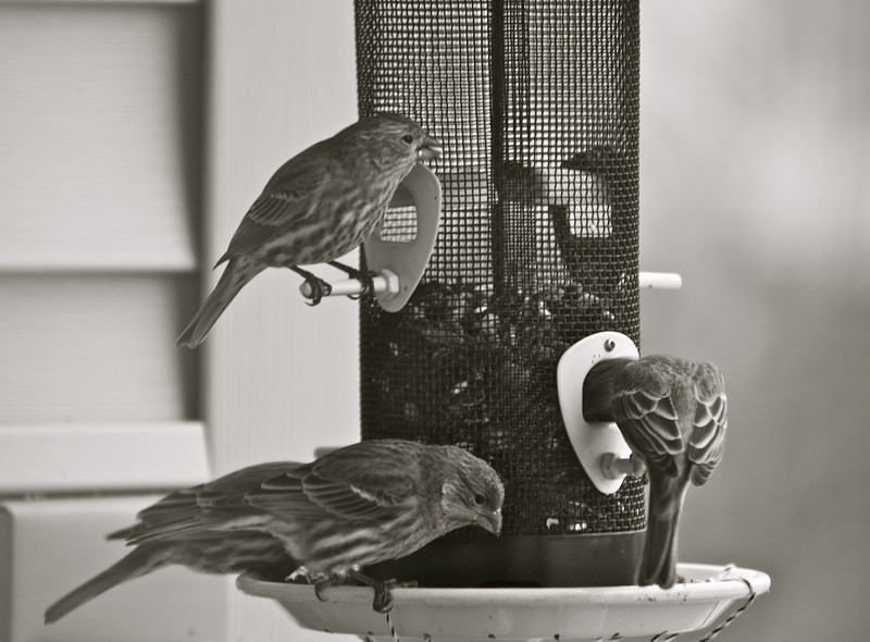 """""""Weekend Munching""""<br /> <br /> <br /> <br /> One swallow does not make a summer.~Aristotle~"""