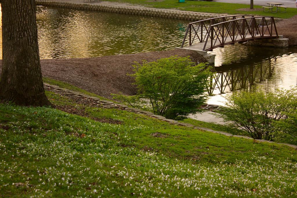 """Simple Bridge""<br /> <br /> <br /> ""Discipline is the bridge between goals and accomplishment.""~ Jim Rohn~"