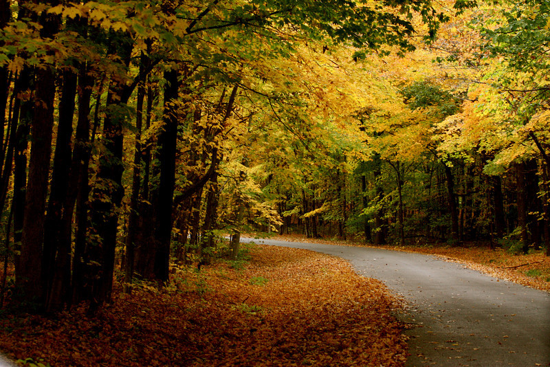 """""""Autumn Beauty""""<br /> <br /> <br /> <br /> <br /> How beautifully leaves grow old.  How full of light and color are their last days.  ~John Burroughs~"""