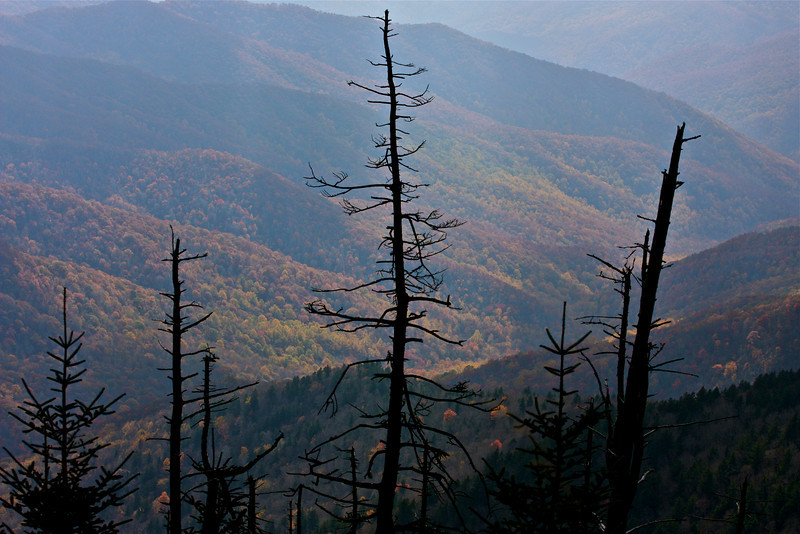 """""""A Quiet Moment at Smokies""""<br /> <br /> <br /> <br /> """"In quiet moments when you think about it, you recognize what is critically important in life and what isn't. Be wise and don't let good things crowd out those that are essential.""""~ Elder Richard G. Scott ~"""