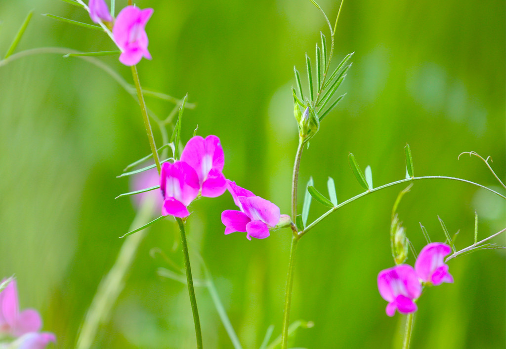 """""""Looking through Grasses""""<br /> <br /> <br /> """"If the sight of the blue skies fills you with joy, if a blade of grass springing up in the fields has power to move you, if the simple things in nature have a message you understand, Rejoice, for your soul is alive.~Eleanora Duse~"""