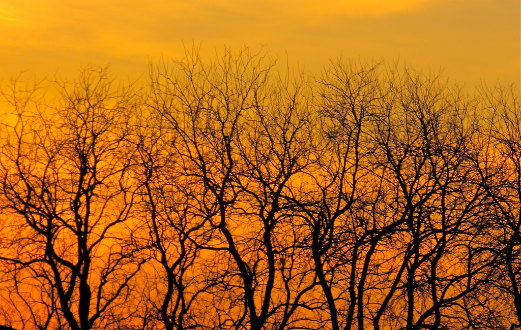 """""""Branched""""<br /> <br /> <br /> <br /> <br /> """"God finds a low branch for the bird that cannot fly.""""~Turkish Proverb~"""