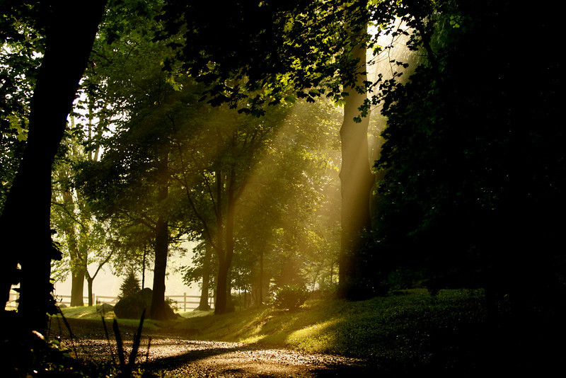 """Light on the path""<br /> <br /> <br /> <br /> Dare to reach out your hand into the darkness, to pull another hand into the light.  ~Norman B. Rice~"