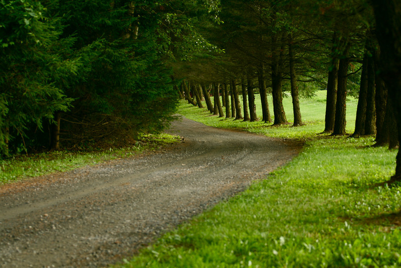 """Twisted Path""<br /> <br /> <br /> ""I dreamed a thousand new paths. . . I woke and walked my old one.""~Chinese Proverb~"