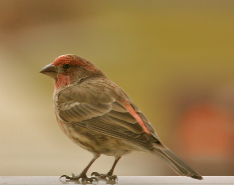 """""""Song Bird""""<br /> <br /> <br /> <br /> """"Instead of weeping when a tragedy occurs in a songbird's life, it sings away its grief. I believe we could well follow the pattern of our feathered friends."""""""