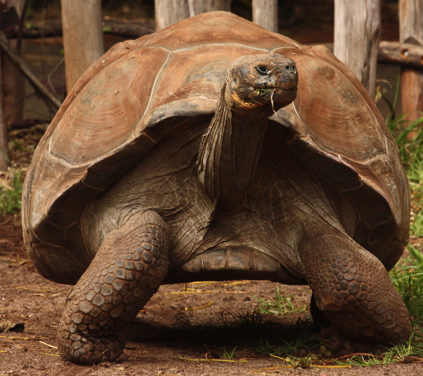 """""""Slow & Sensible""""<br /> <br /> <br /> """"Even as a tortoise draws in its limbs, the wise can draw in their senses at will."""""""